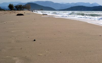 MIO-ECSDE a pioneer in marine litter monitoring webinars