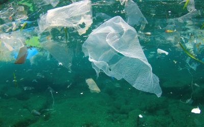 The Adriatic and Ionian Seas impacted by marine litter, new study finds