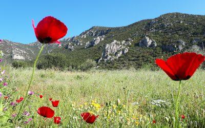Summer University 2018 on Biosphere Reserves: register now!