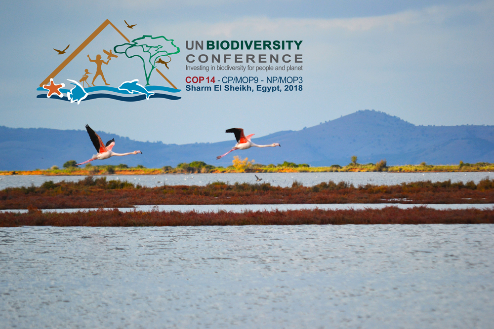 MIO-ECSDE showcases the nexus approach as a tool for safeguarding biodiversity at the UN Biodiversity Conference in Egypt
