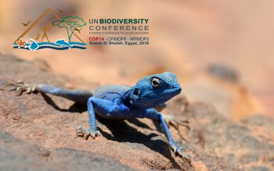 UN Biodiversity Conference in Egypt crafts a new deal for nature and people: MIO-ECSDE was there!