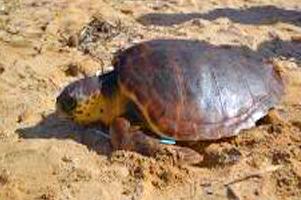 Nature Trust Malta protège les zones humides et lutte contre la pollution par les plastiques