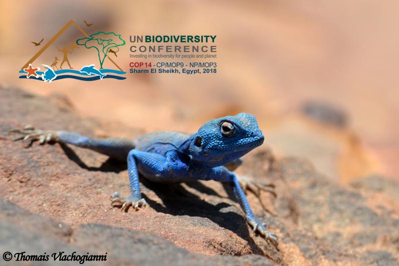 La Conférence des Nations Unies sur la biodiversité en Egypte élabore un nouveau contrat pour la nature et les habitants : MIO-ECSDE était là !