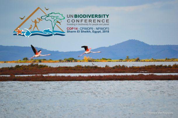 MIO-ECSDE présente l'approche du lien comme outil de sauvegarde de la biodiversité à la Conférence des Nations Unies sur la biodiversité en Égypte