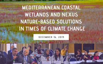 Journalists and MIO-ECSDE member NGOs now better equipped to protect disappearing coastal wetlands of the Mediterranean