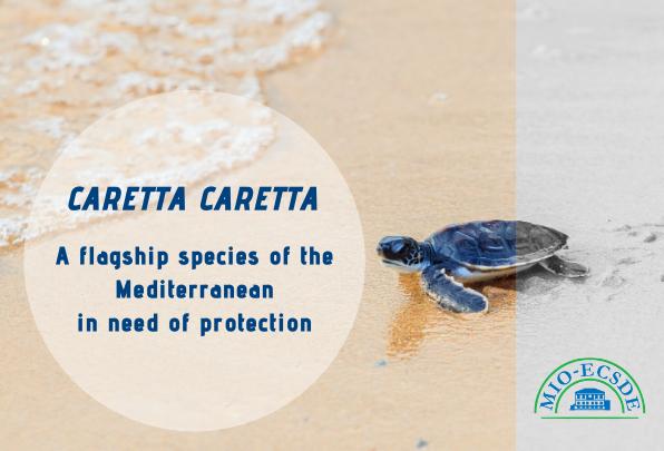La Convention de Berne approuve pleinement les plaintes de MEDASSET concernant les habitats majeurs des tortues marines
