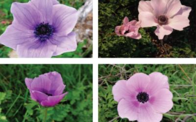 Showcasing plant diversity in Mount Barquash, Jordan